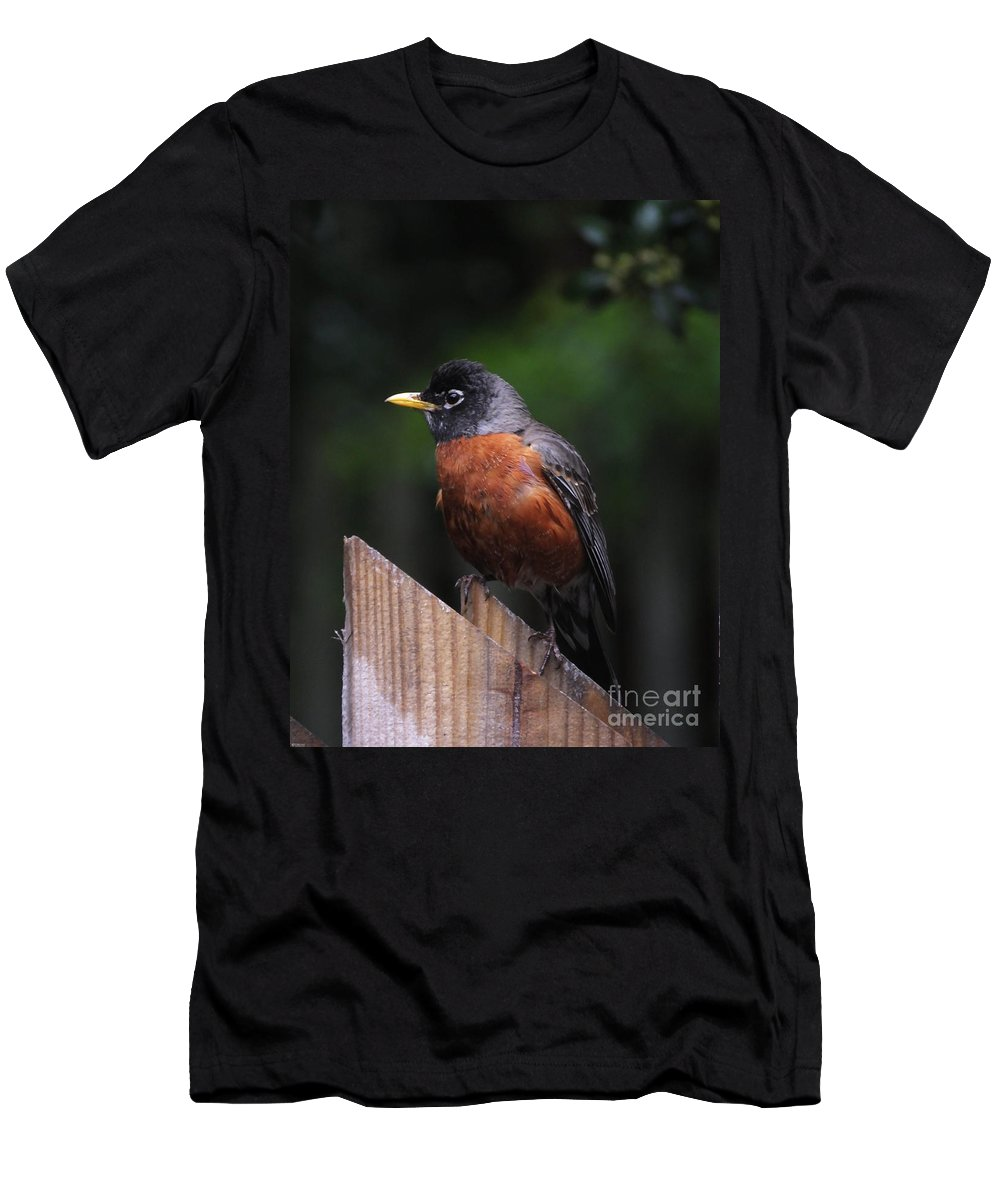 Robin Men's T-Shirt (Athletic Fit) featuring the photograph Male Robin by Lizi Beard-Ward