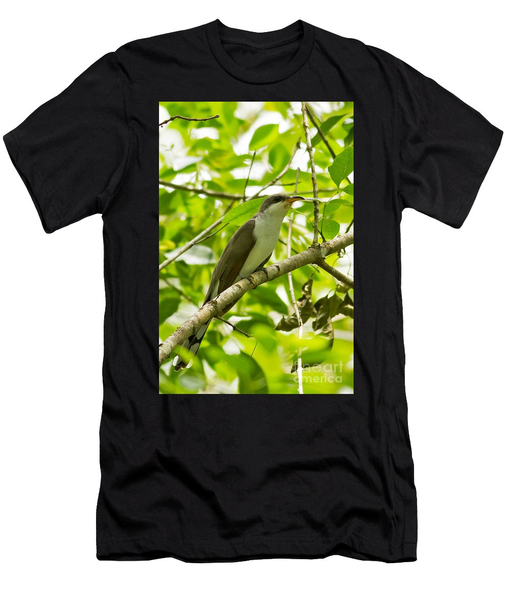 Mangrove Cuckoo Men's T-Shirt (Athletic Fit) featuring the photograph Mangrove Cuckoo by Natural Focal Point Photography
