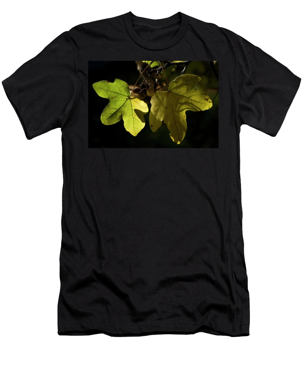 Photography Men's T-Shirt (Athletic Fit) featuring the photograph Maple by Ignacio Leal Orozco