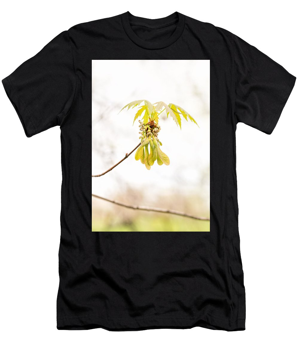 Acer Men's T-Shirt (Athletic Fit) featuring the photograph Maple Leaves And Fruits by Alain De Maximy
