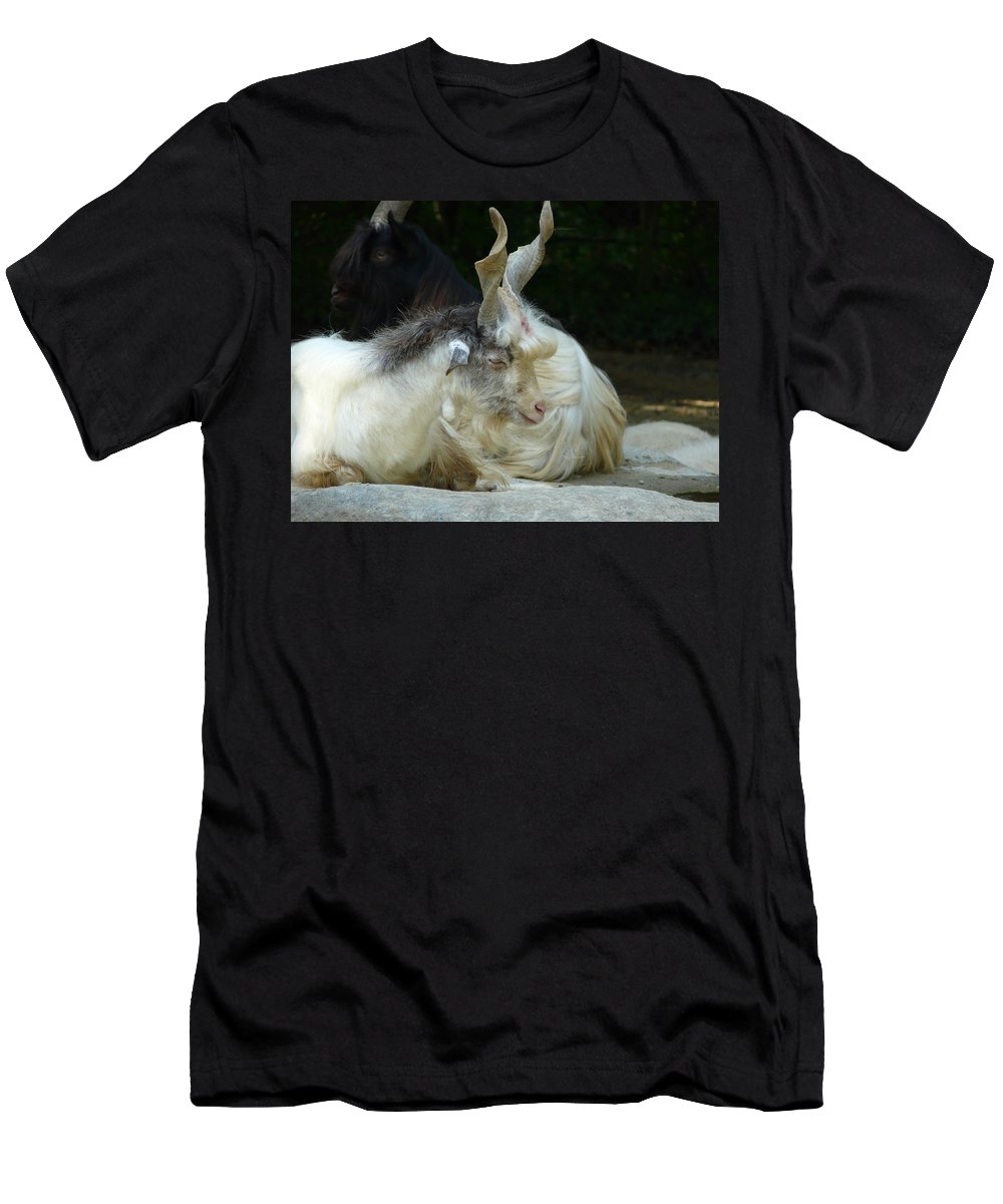 Goat Men's T-Shirt (Athletic Fit) featuring the photograph Markhor by Valerie Ornstein