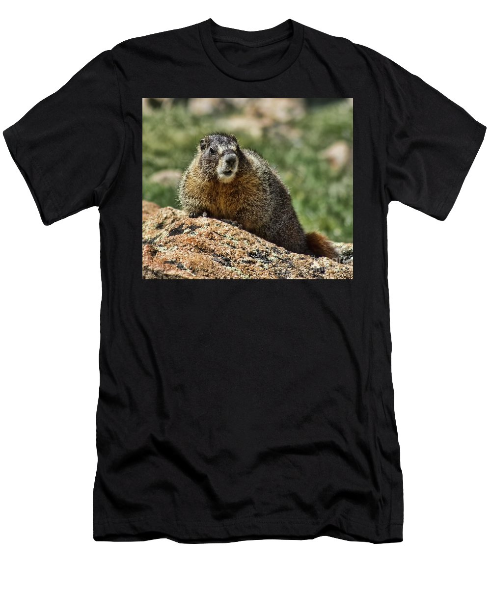 Animal Men's T-Shirt (Athletic Fit) featuring the photograph Marmot by Steven Parker