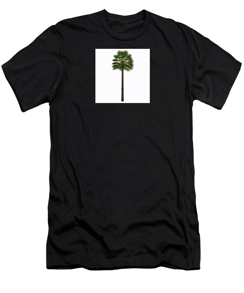 3d Illustration Men's T-Shirt (Athletic Fit) featuring the painting Mediterranean Fan Palm Tree by Corey Ford