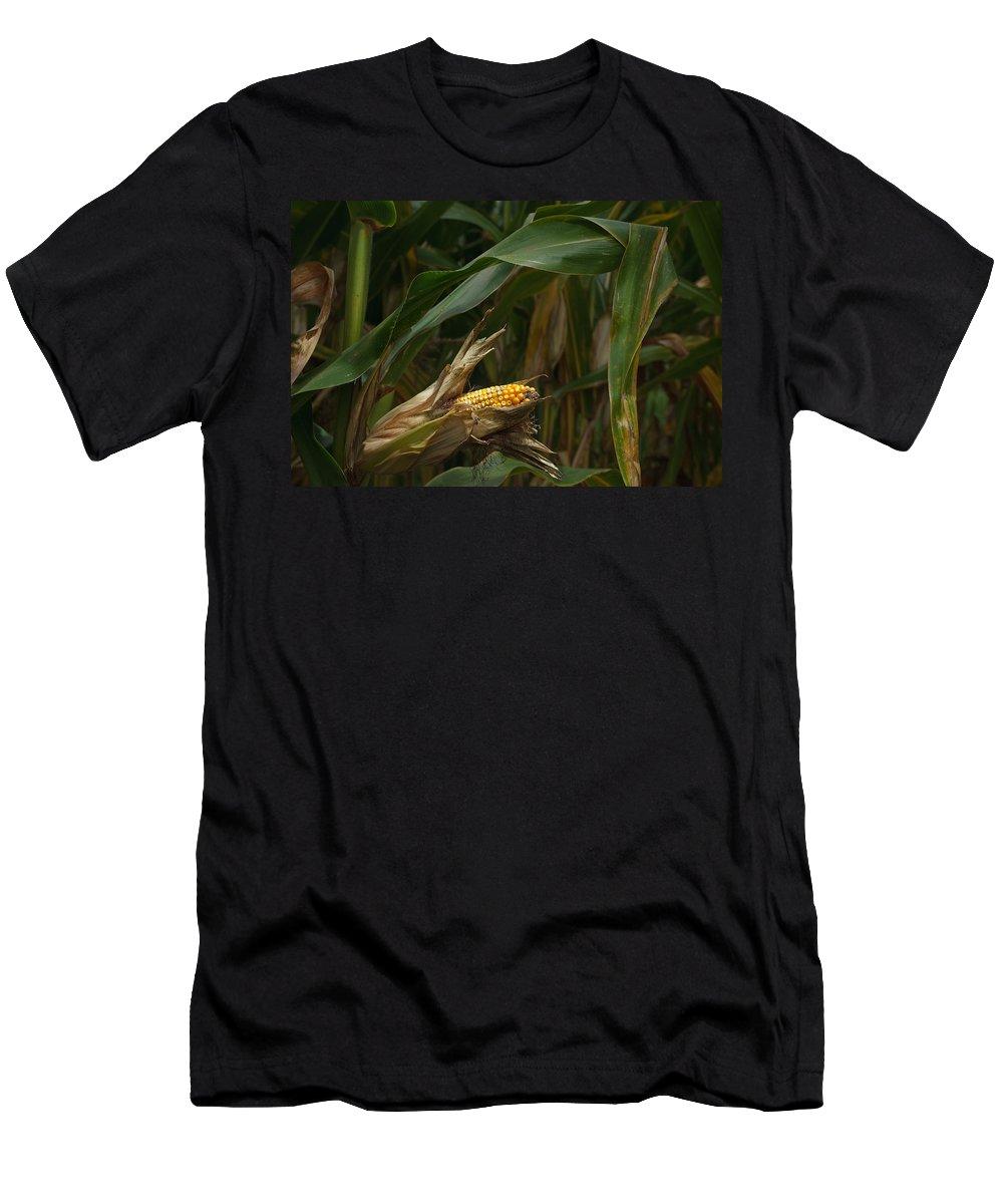 Corn Men's T-Shirt (Athletic Fit) featuring the photograph Midwest Harvest by Steve Gadomski