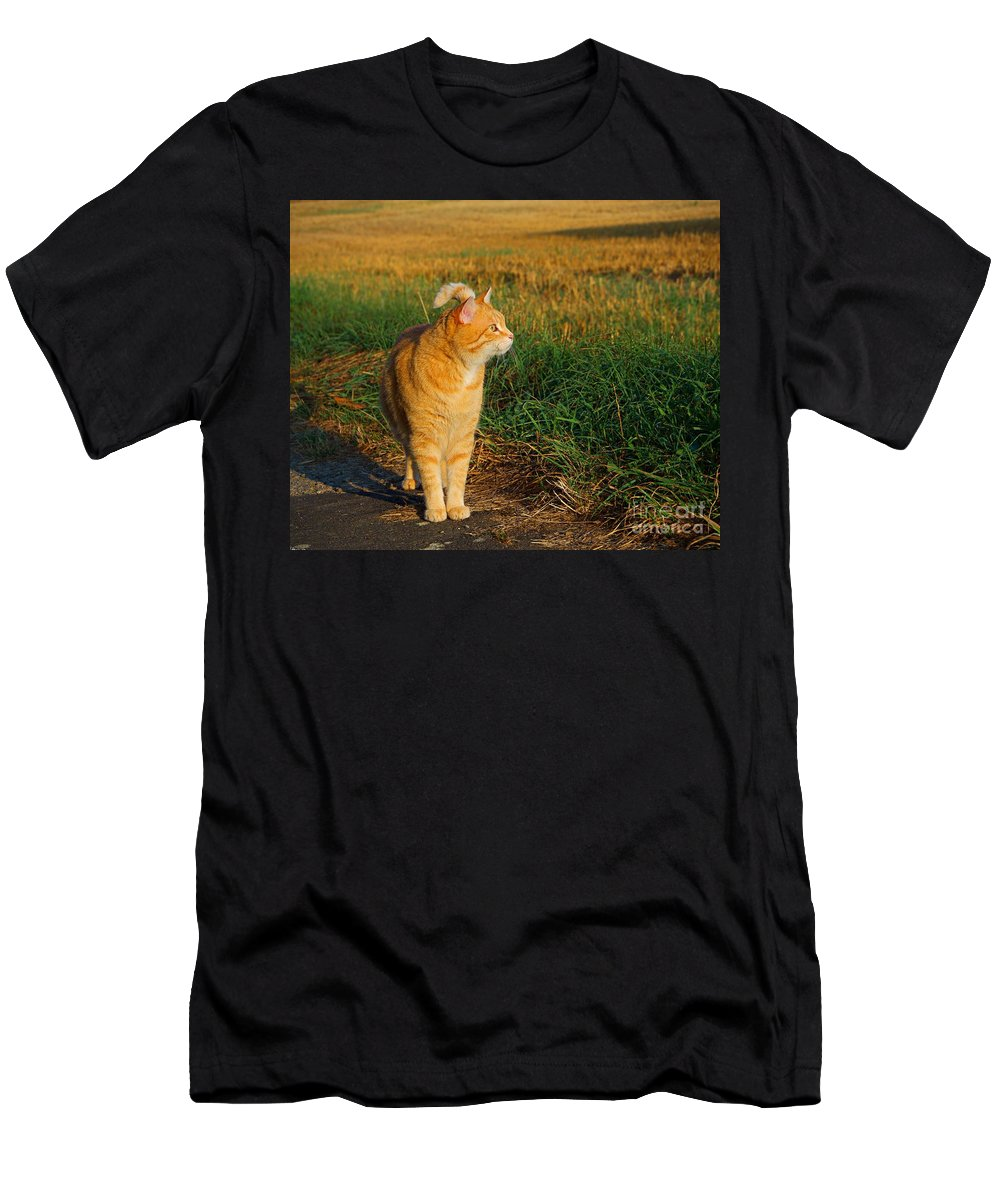 Cat Men's T-Shirt (Athletic Fit) featuring the photograph Miss Morning by Christoph Beyhl