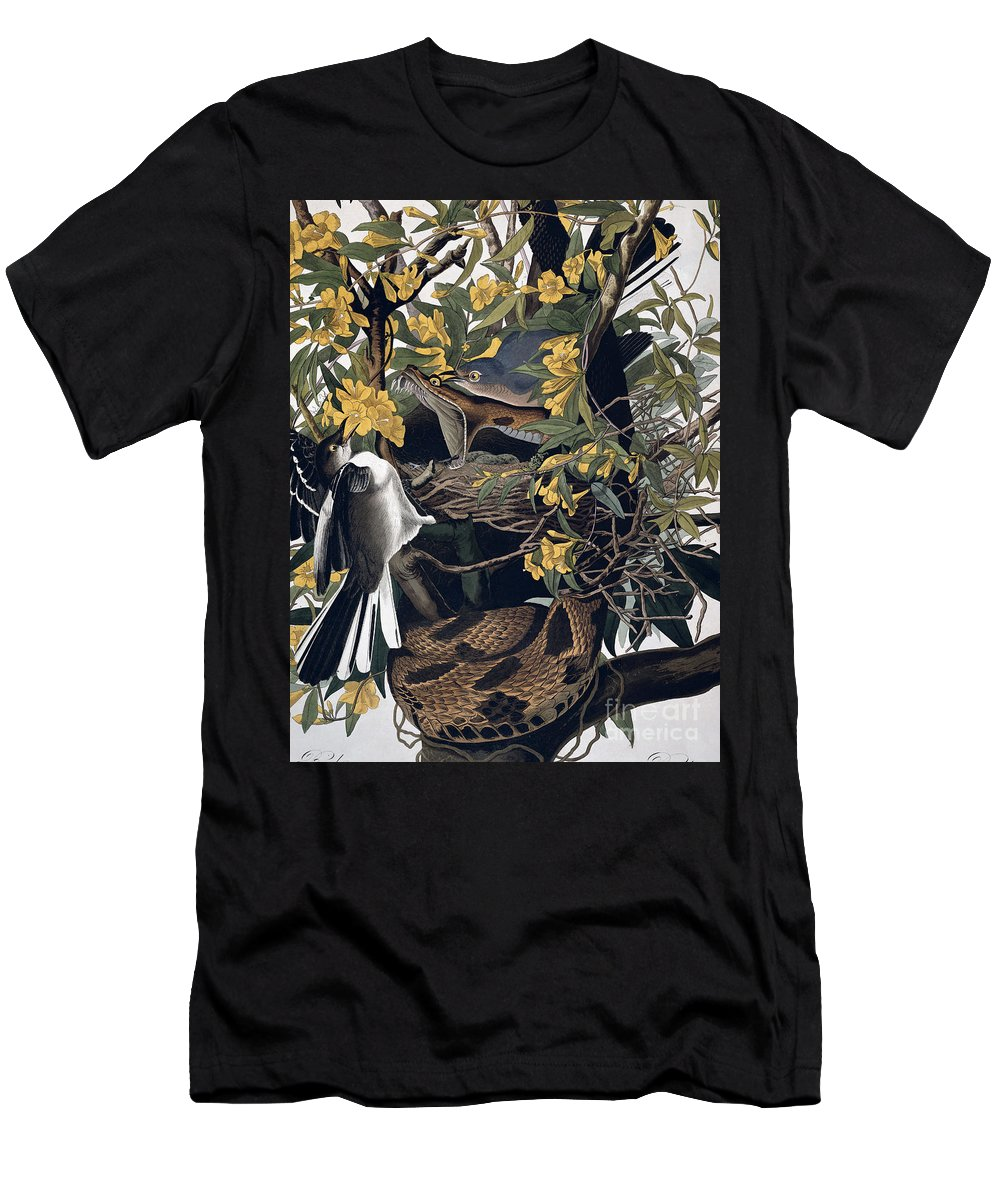 Mocking Birds And Rattlesnake Men's T-Shirt (Athletic Fit) featuring the drawing Mocking Birds And Rattlesnake by John James Audubon