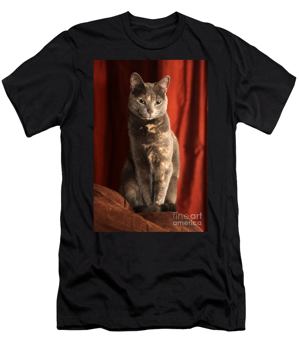 Cat Men's T-Shirt (Athletic Fit) featuring the photograph Mollie by Amanda Barcon
