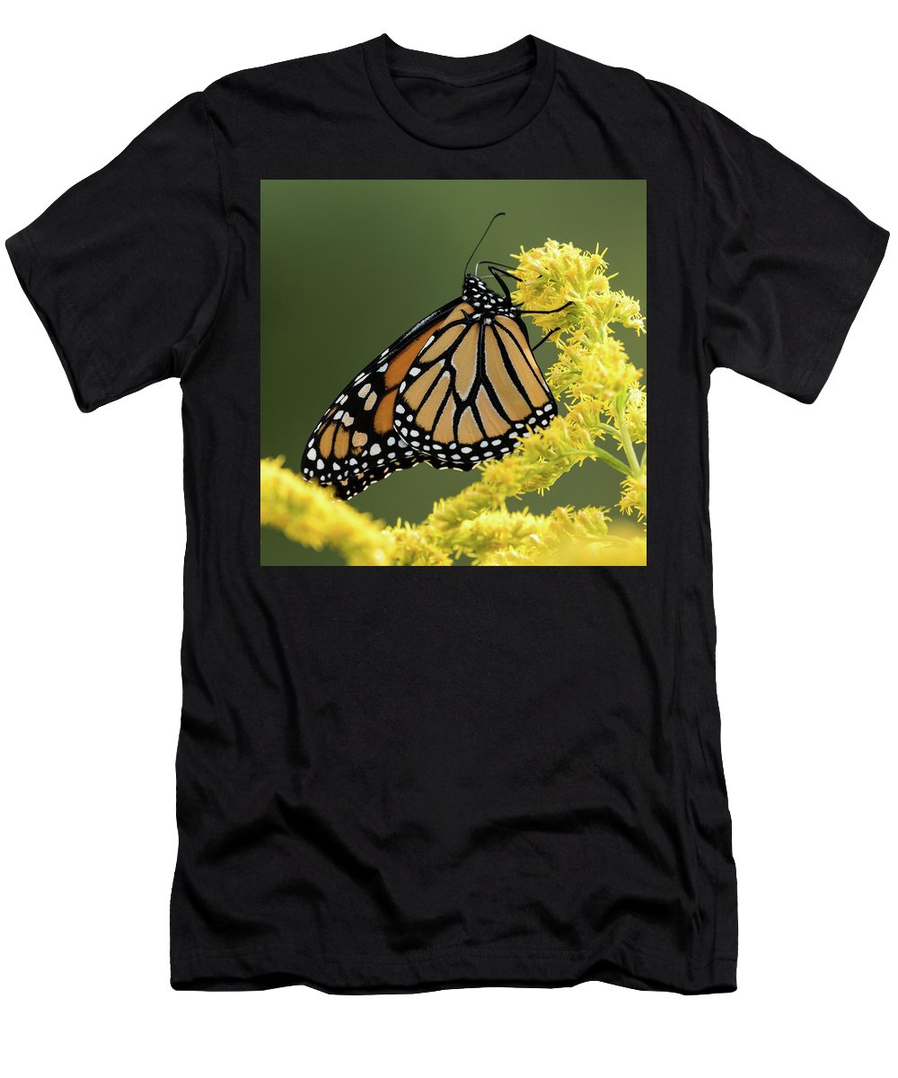 Monarch Butterfly Men's T-Shirt (Athletic Fit) featuring the photograph Monarch On Goldenrod by Jurgen Lorenzen