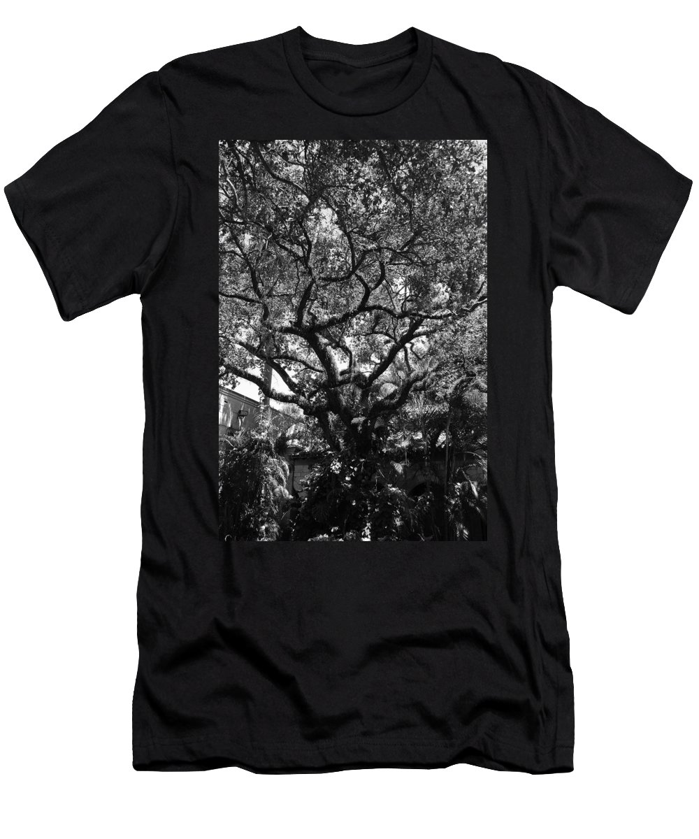 Black And White Men's T-Shirt (Athletic Fit) featuring the photograph Monastery Tree by Rob Hans