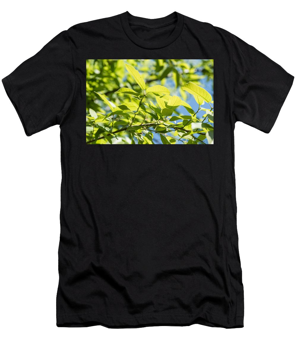 Cedar Park Men's T-Shirt (Athletic Fit) featuring the photograph Monterrey Oak Leaves In Spring by JG Thompson