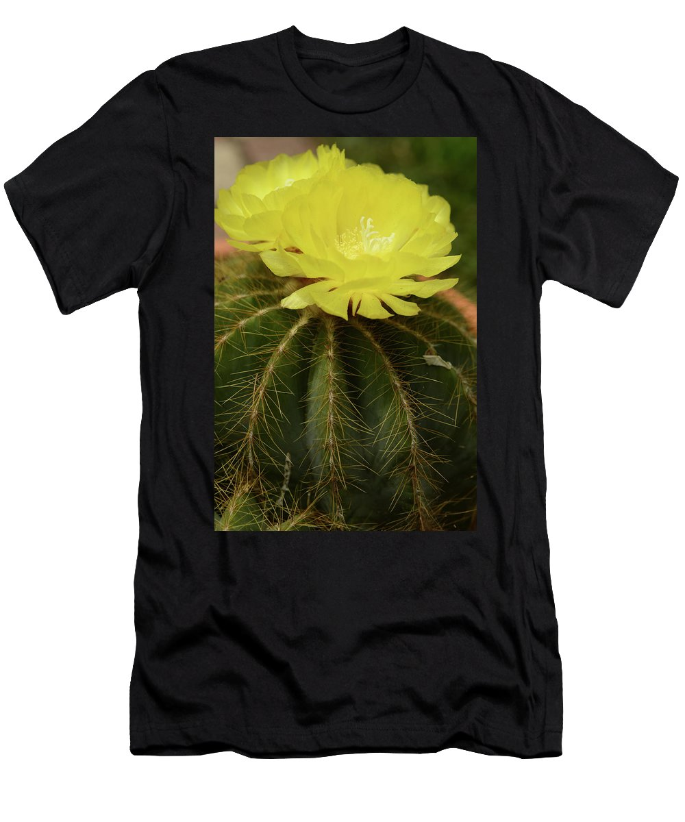 Mooncactus Cactus Flower Bloom Plant Yellow Men's T-Shirt (Athletic Fit) featuring the photograph Moon Cactus Blooms by Gwen Juarez