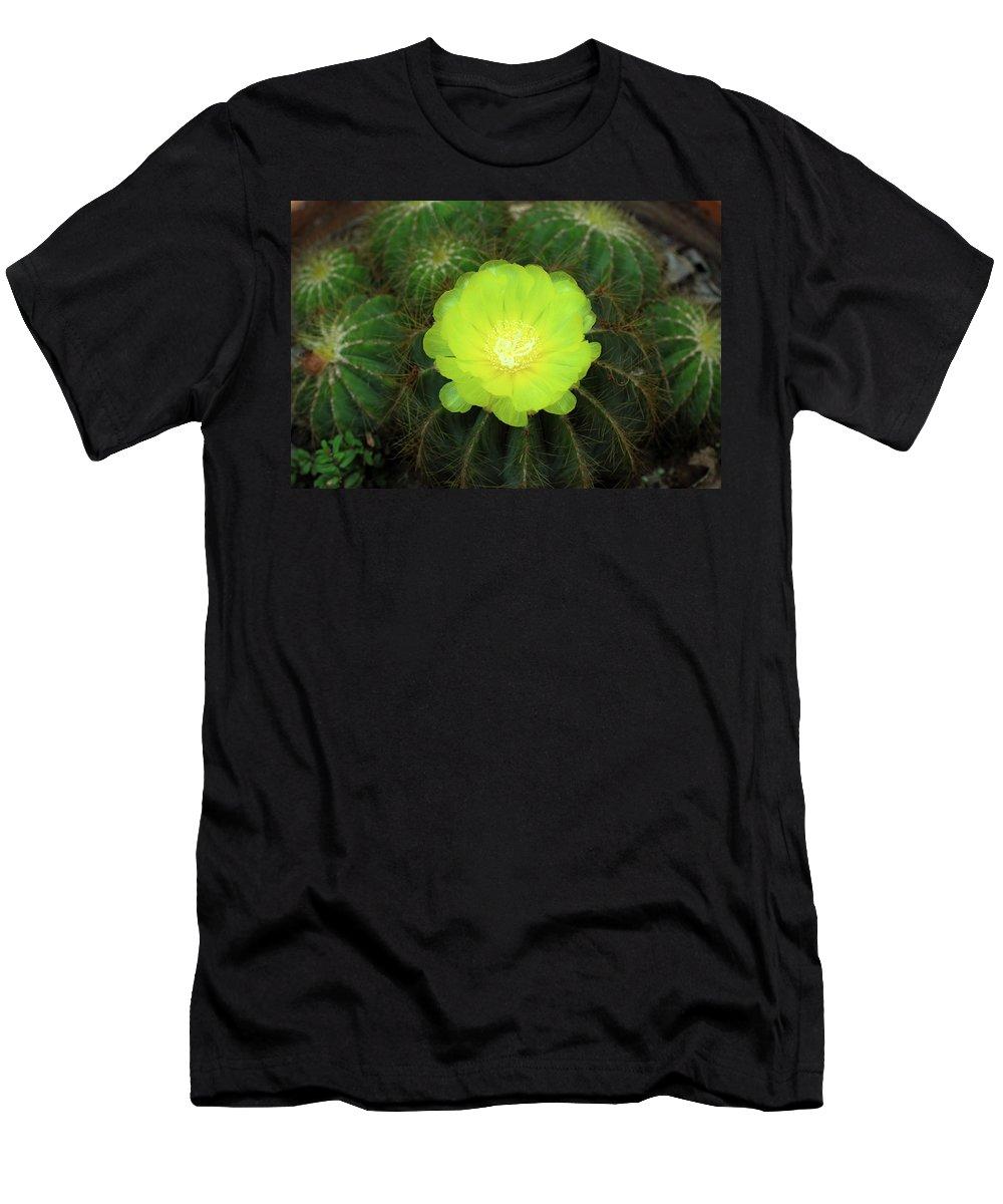 Mooncactus Cactus Flower Plant Bloom Yellow Men's T-Shirt (Athletic Fit) featuring the photograph Moon Cactus by Gwen Juarez
