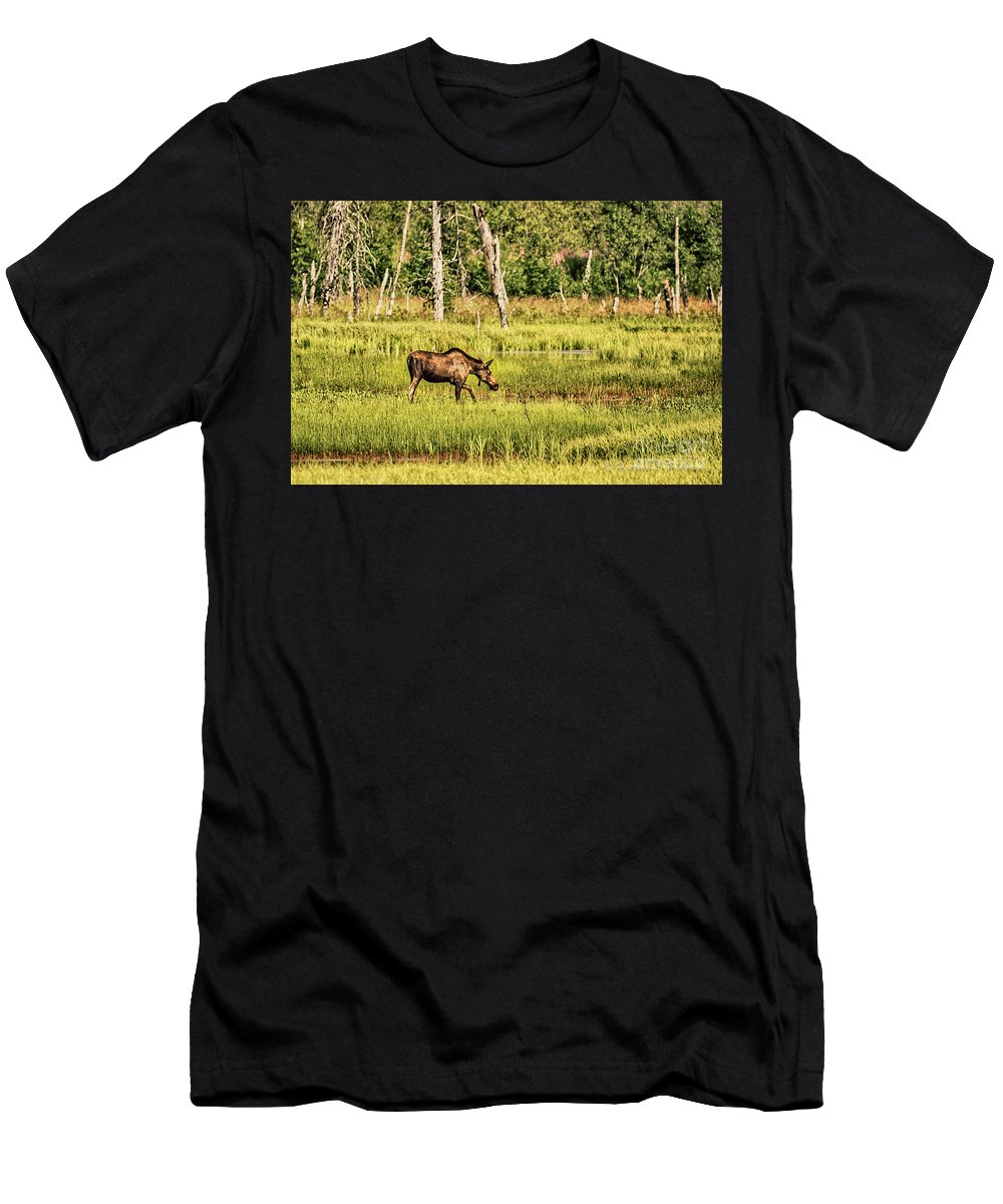 Moose Men's T-Shirt (Athletic Fit) featuring the photograph Moose Meadows by Heather Hubbard