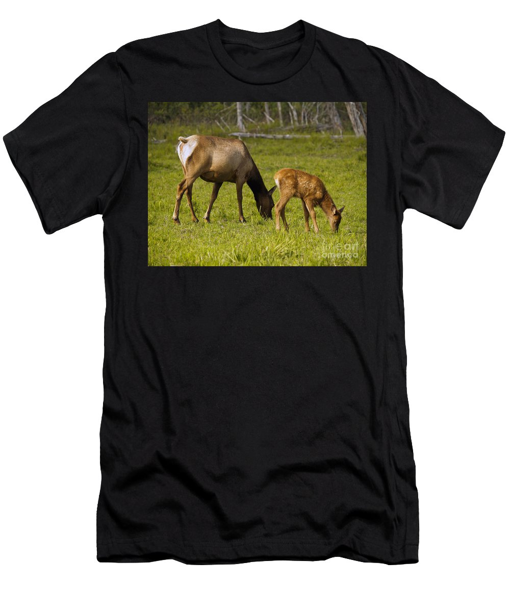 Elk Men's T-Shirt (Athletic Fit) featuring the photograph Mother Elk And Fawn by Denise McAllister