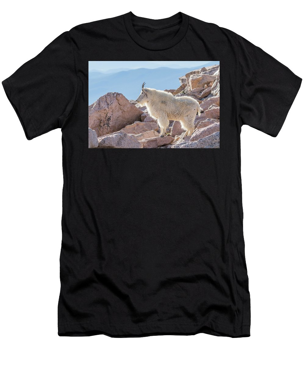 Mountain Goat Men's T-Shirt (Athletic Fit) featuring the photograph Mountain Goat Takes In Its High Altitude Home by Tony Hake