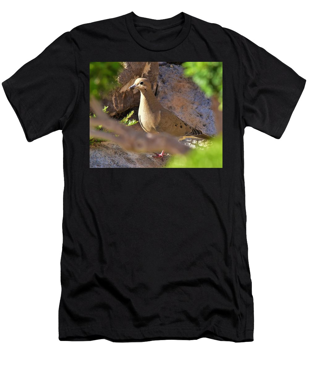 Linda Brody Men's T-Shirt (Athletic Fit) featuring the photograph Mourning Dove On The Hillside by Linda Brody