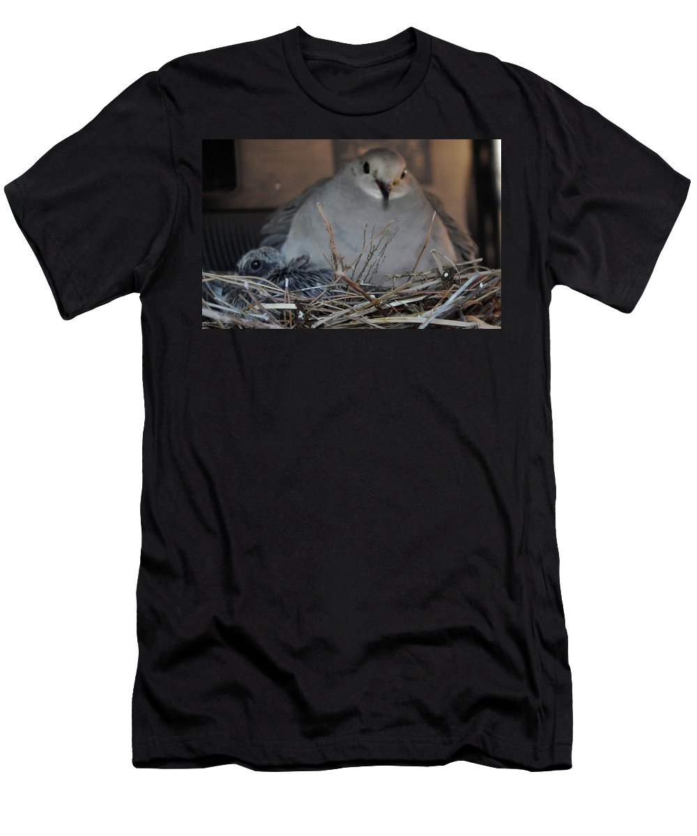 Animal Men's T-Shirt (Athletic Fit) featuring the photograph Mourning Dove With One Of Two Chicks by Jay Milo