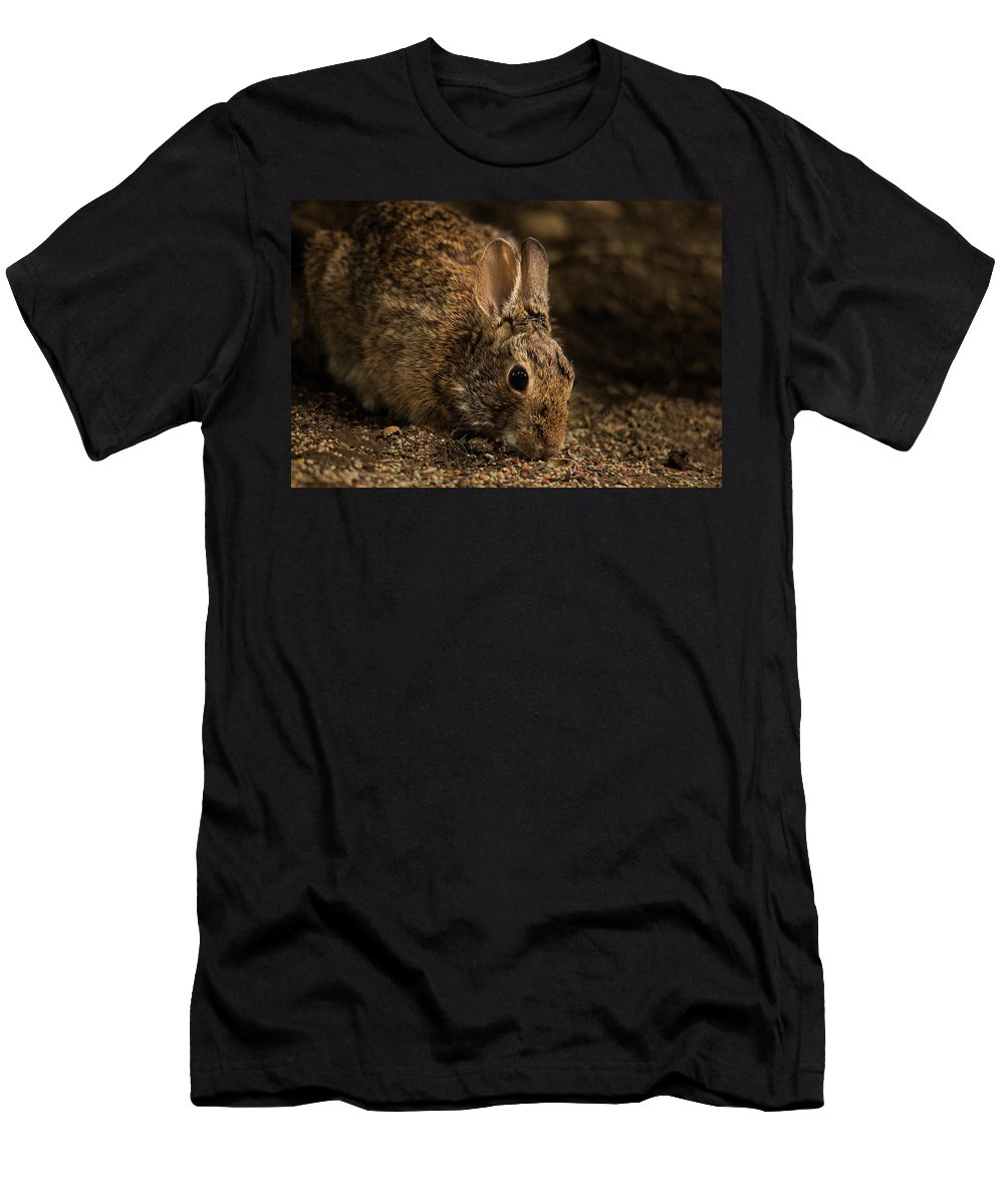 Animal Men's T-Shirt (Athletic Fit) featuring the photograph Mr. B by Bob Cournoyer