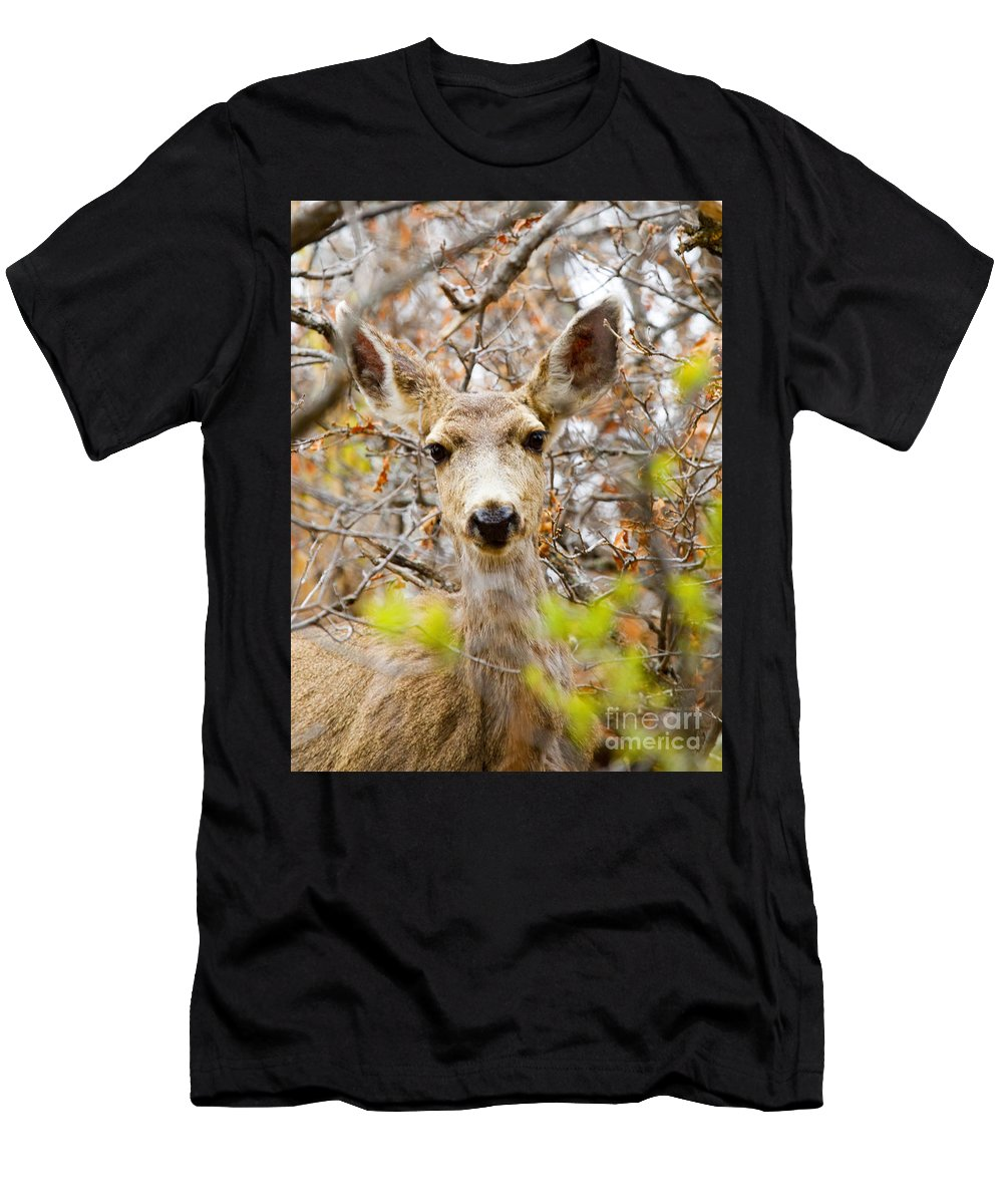 Deer Men's T-Shirt (Athletic Fit) featuring the photograph Mule Deer Portrait In The Pike National Forest by Steve Krull