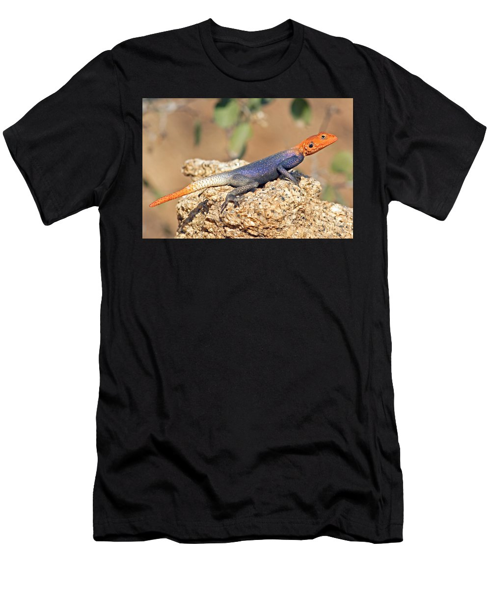 Namib Rock Agama Men's T-Shirt (Athletic Fit) featuring the photograph Namib Rock Agama, Male by Aivar Mikko