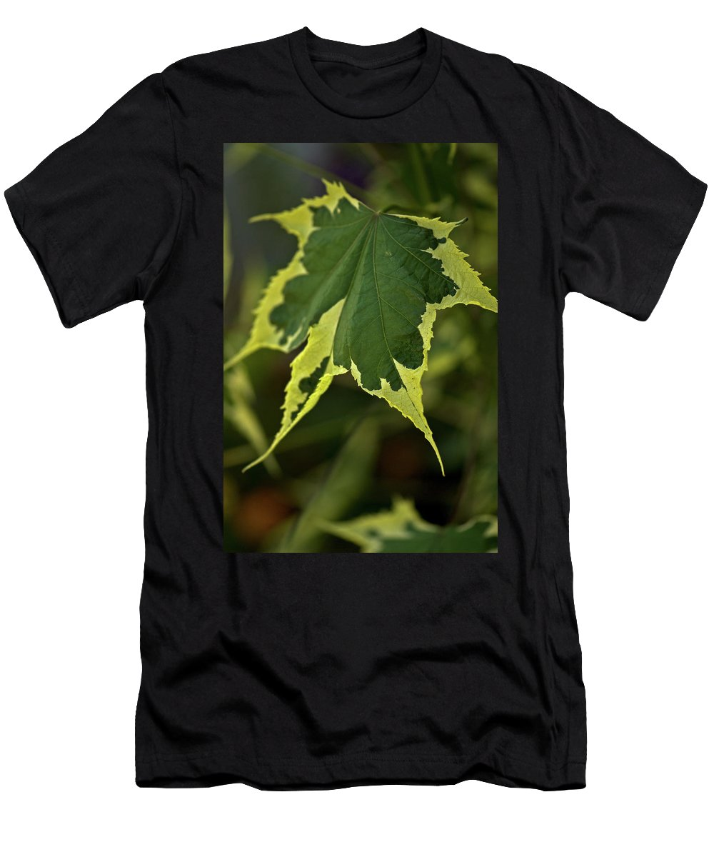 naturally Framed Men's T-Shirt (Athletic Fit) featuring the photograph Naturally Framed by Paul Mangold