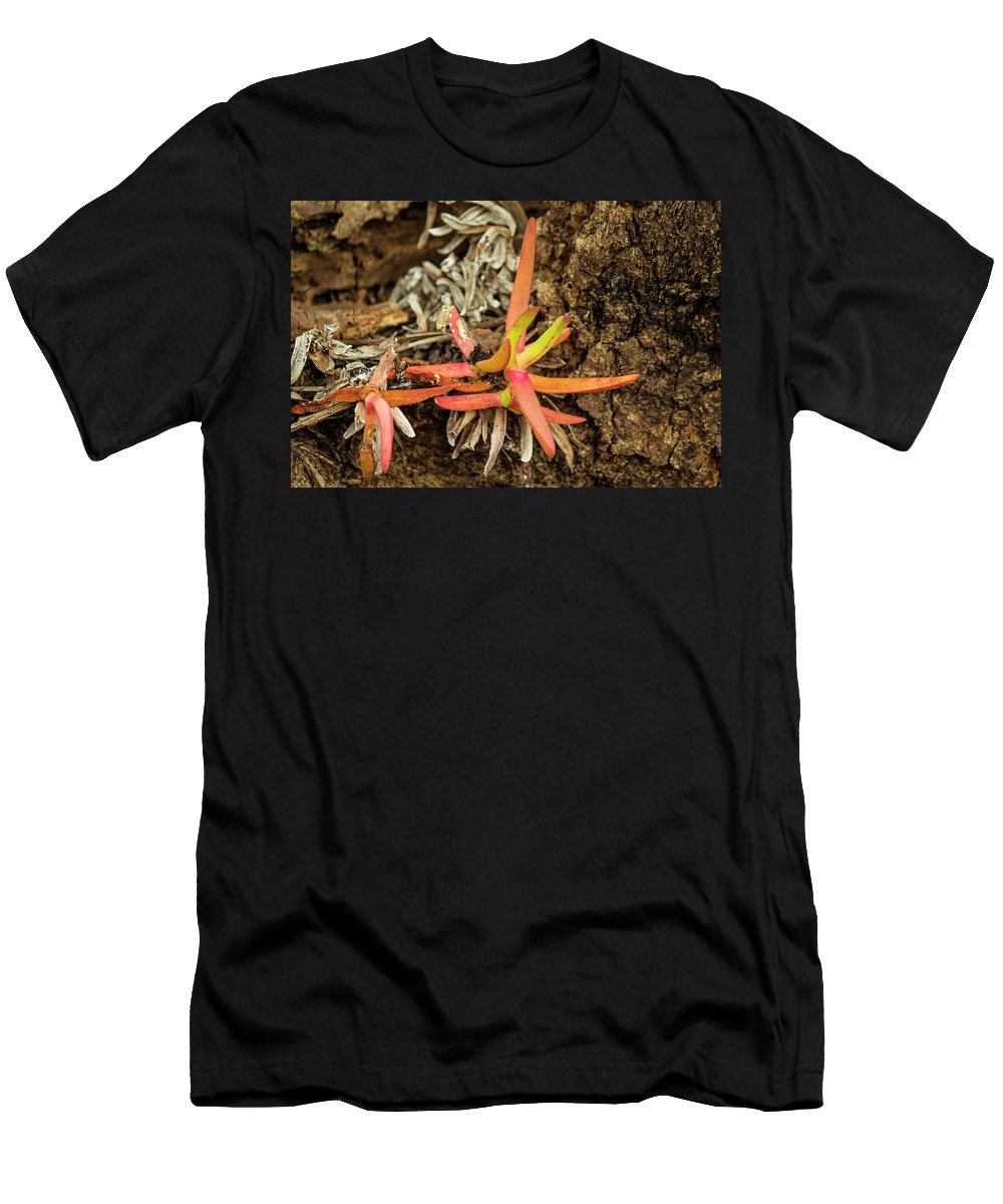 Plant Men's T-Shirt (Athletic Fit) featuring the photograph New Life by Tania Read