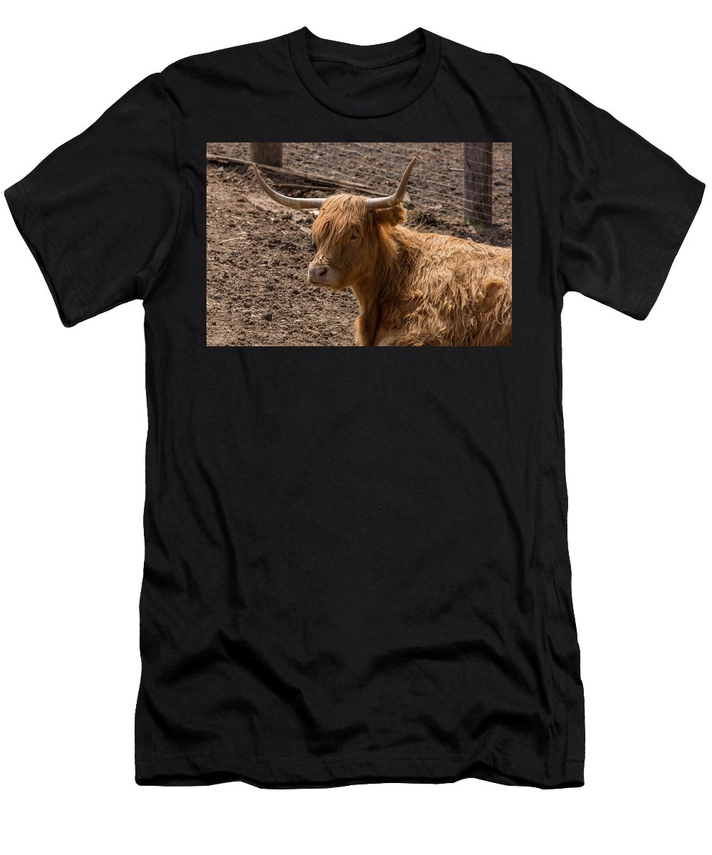 Farm Men's T-Shirt (Athletic Fit) featuring the photograph New Zealand Cow by Peter Moore