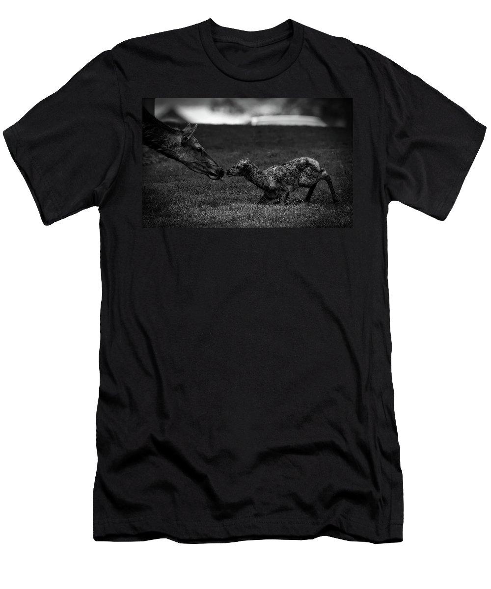 Newborn Men's T-Shirt (Athletic Fit) featuring the photograph Newborn Elk by Nps