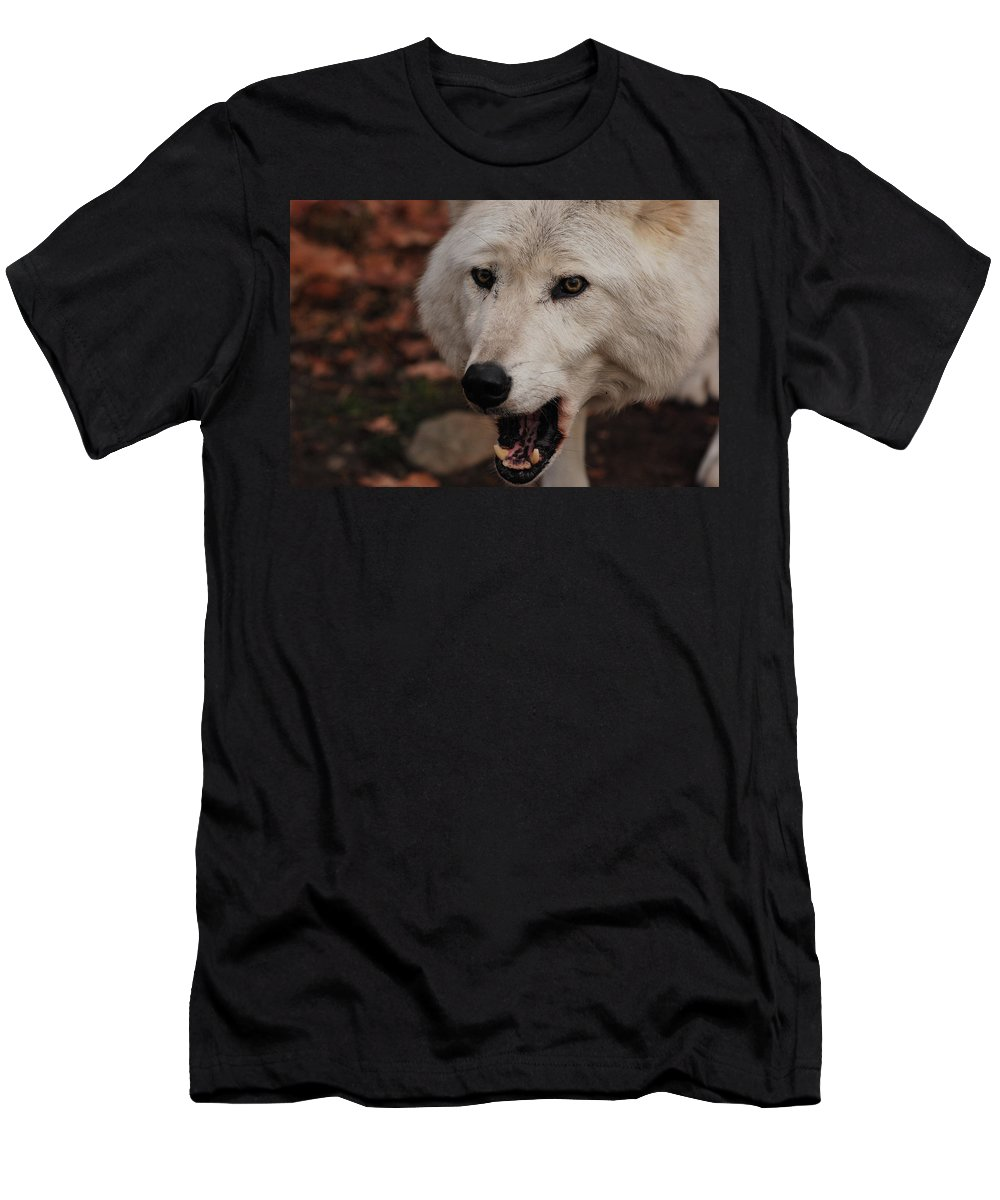Wolf Men's T-Shirt (Athletic Fit) featuring the photograph Not A Happy Face by Lori Tambakis