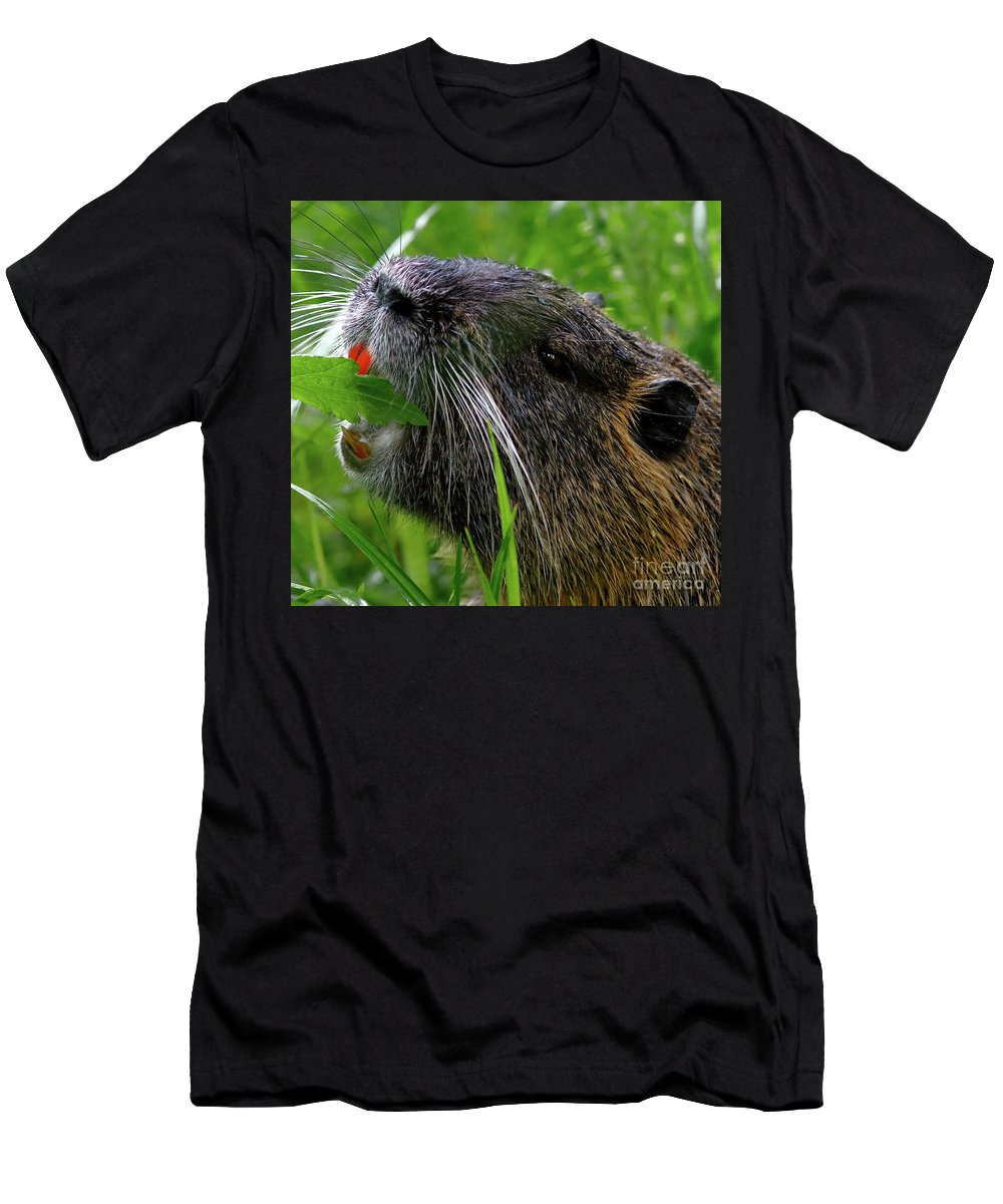 Nutria Men's T-Shirt (Athletic Fit) featuring the photograph Nutria Orange by Marland Howard
