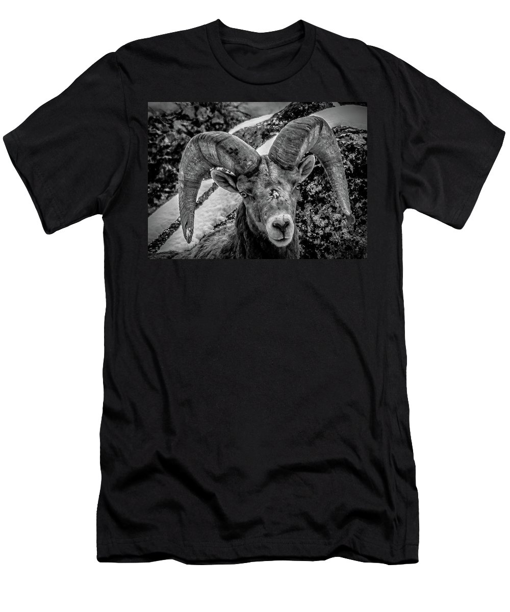 Wild Sheep T-Shirt featuring the photograph Old Ram by Jason Brooks