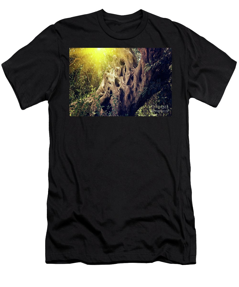 Kira Yan Men's T-Shirt (Athletic Fit) featuring the photograph Old Sacred Olive Tree by Kira Yan