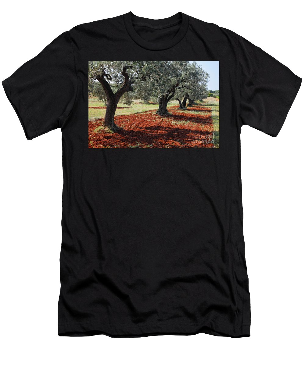 Tree Men's T-Shirt (Athletic Fit) featuring the photograph Olive Trees by Nino Marcutti