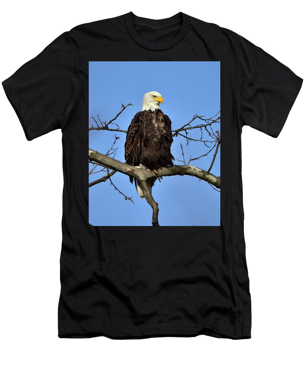 American Bald Eagle Men's T-Shirt (Athletic Fit) featuring the photograph On The Lookout by M James McAdams