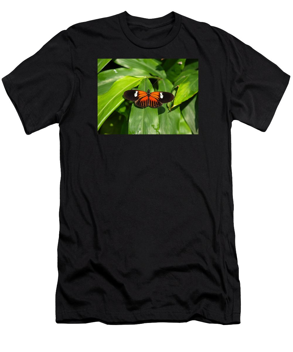 Ann Keisling Men's T-Shirt (Athletic Fit) featuring the photograph Orange And The Black by Ann Keisling