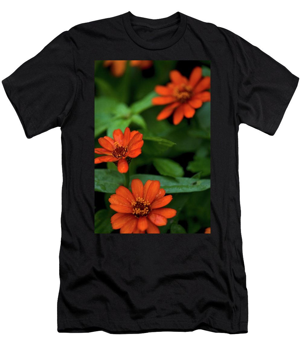 Daisey's Men's T-Shirt (Athletic Fit) featuring the photograph Orange Daisey's by Paul Mangold