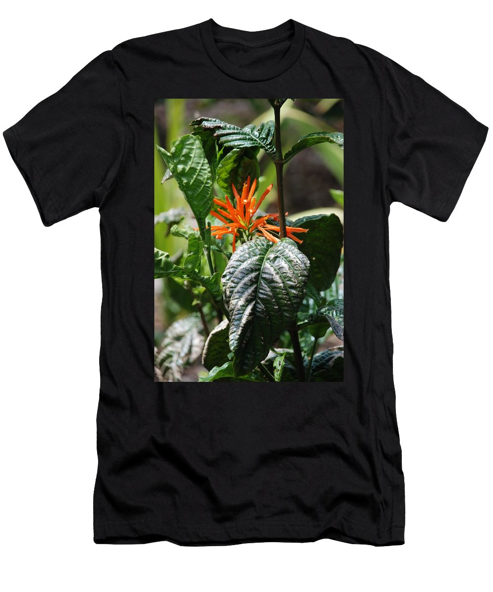 Banana Leaf Men's T-Shirt (Athletic Fit) featuring the photograph Orange Plants by Rob Hans