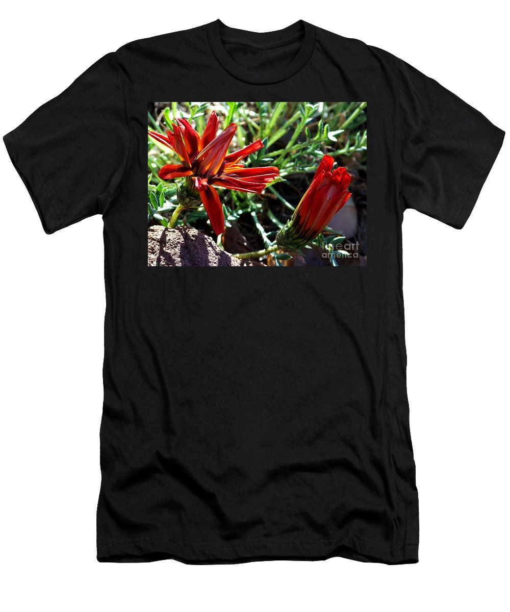Gazania Men's T-Shirt (Athletic Fit) featuring the photograph Orange Power by Kathy McClure