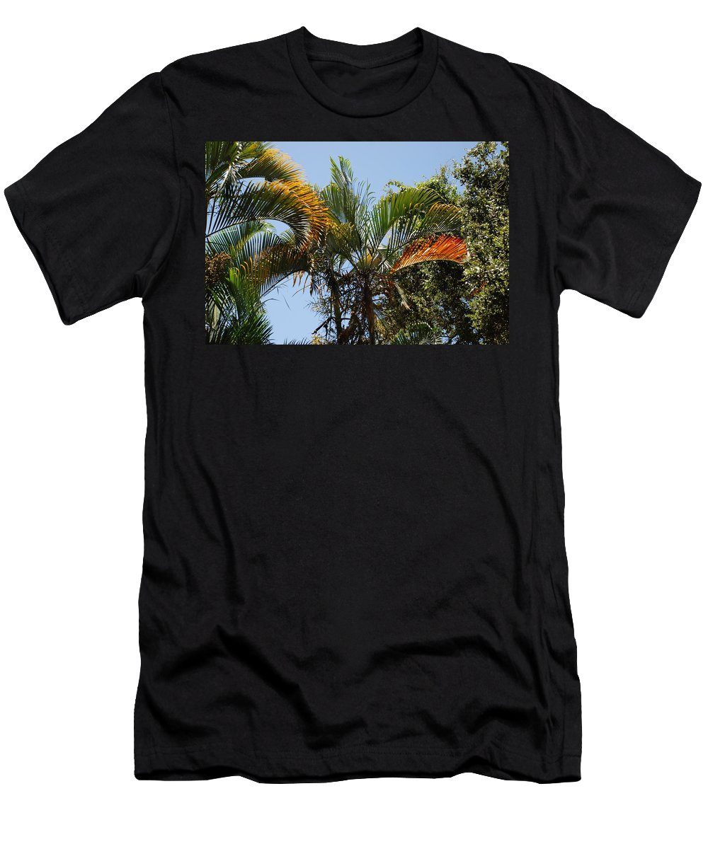 Palms Men's T-Shirt (Athletic Fit) featuring the photograph Orange Trees by Rob Hans