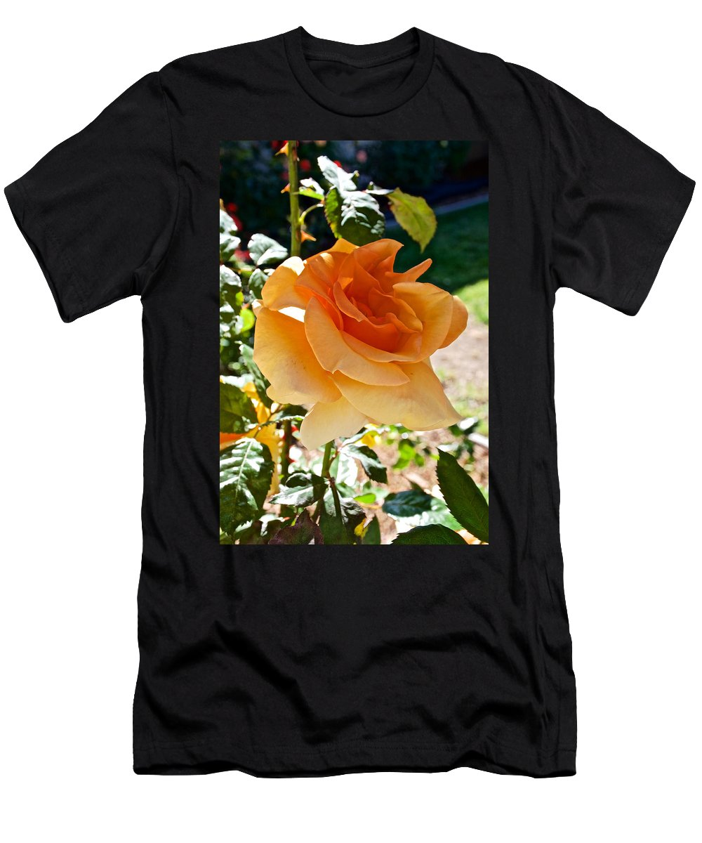 Orange-yellow Rose At Pilgrim Place In Claremont Men's T-Shirt (Athletic Fit) featuring the photograph Orange-yellow Rose At Pilgrim Place In Claremont-california by Ruth Hager