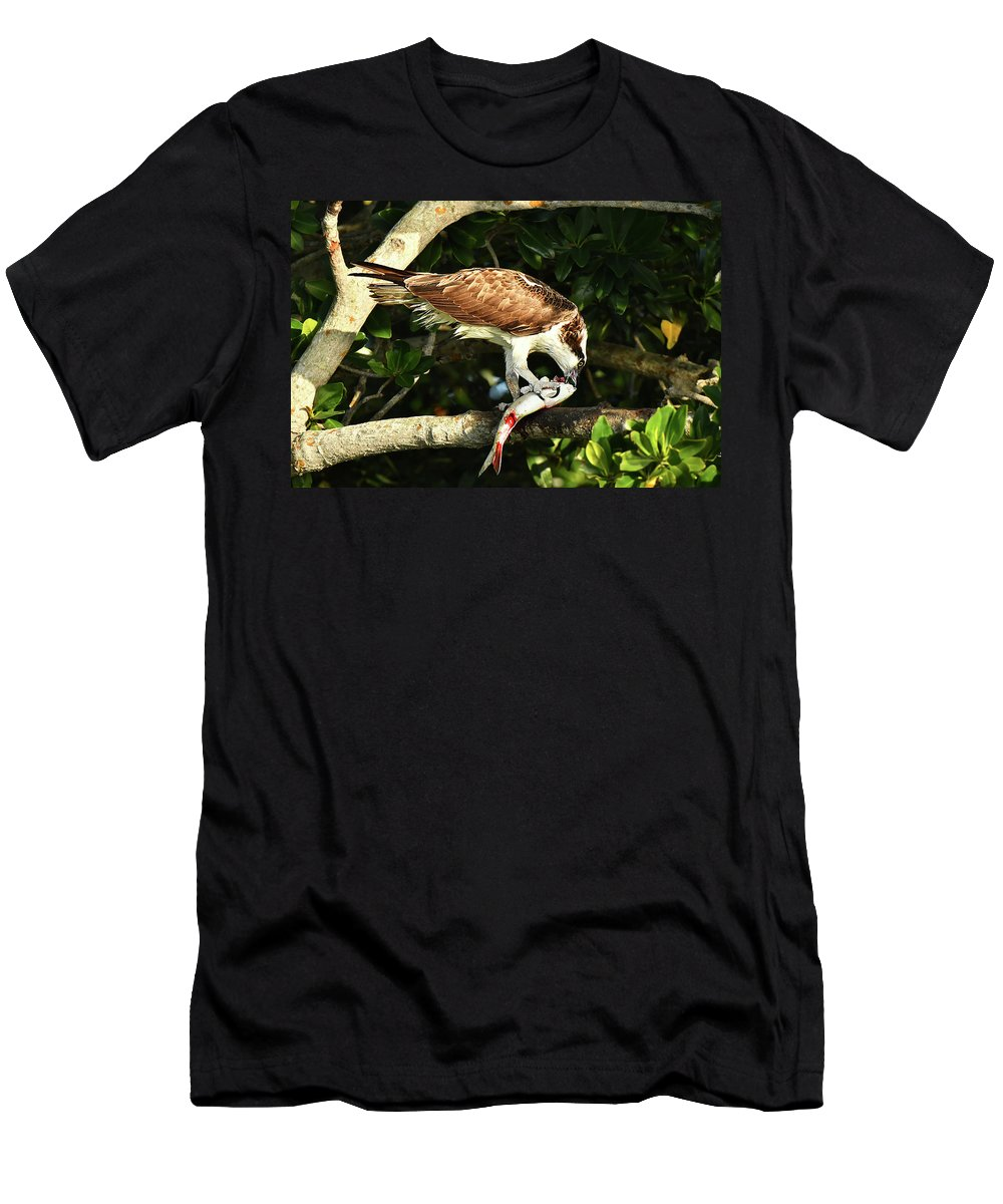 Bird Men's T-Shirt (Athletic Fit) featuring the photograph Osprey Dining by Alan Lenk