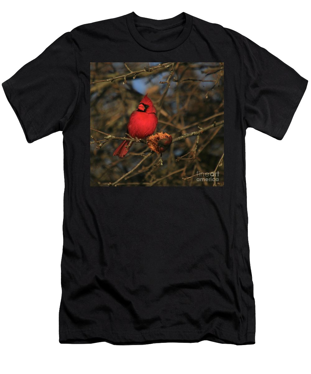 Bird Men's T-Shirt (Athletic Fit) featuring the photograph Out On A Limb by Robert Pearson