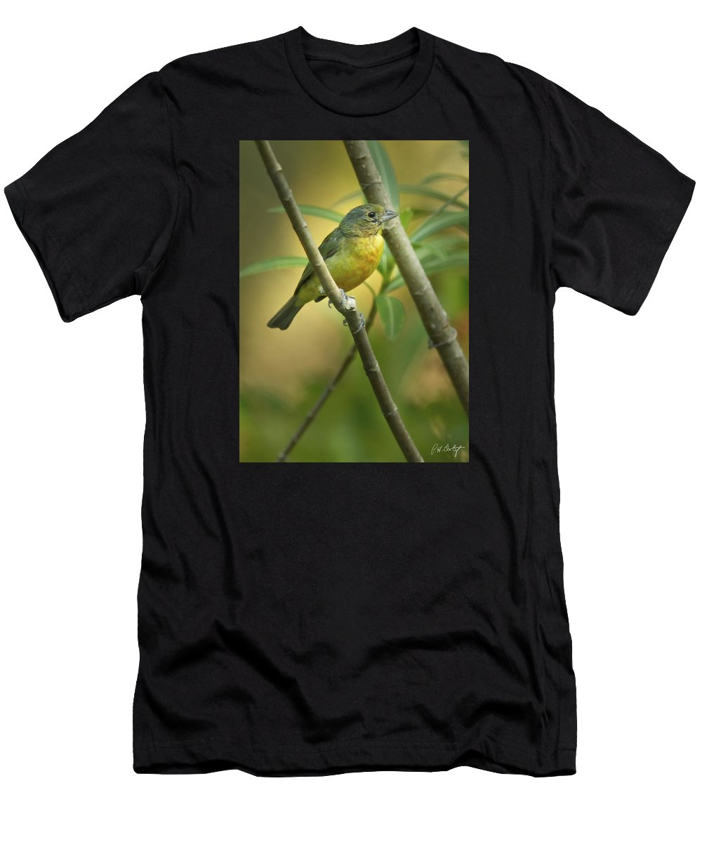 Bird Men's T-Shirt (Athletic Fit) featuring the photograph Painted Bunting Female by Phill Doherty