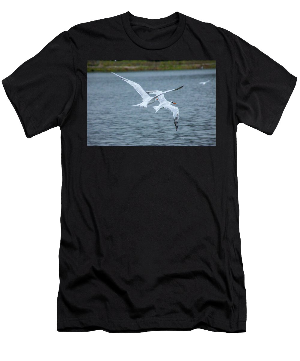 Tens Men's T-Shirt (Athletic Fit) featuring the photograph Pair Of Terns by Craig Colbert