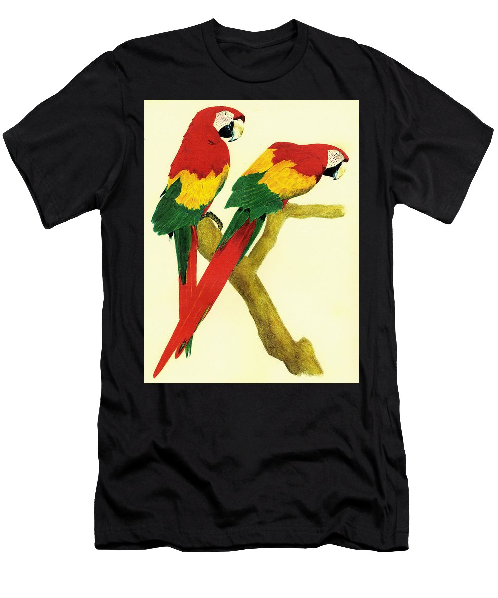 Animals Men's T-Shirt (Athletic Fit) featuring the painting Parrots by Michael Vigliotti