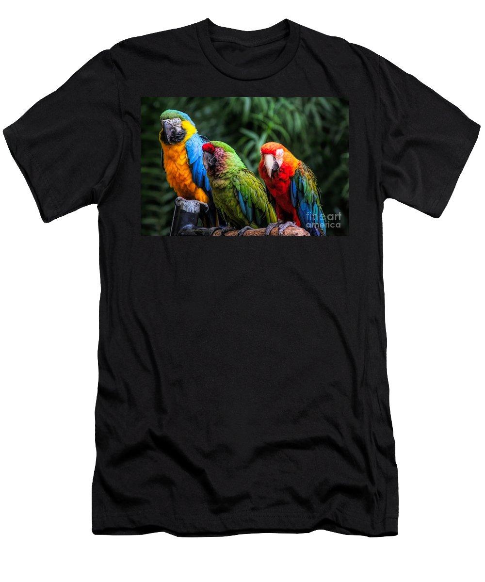Parrots Men's T-Shirt (Athletic Fit) featuring the photograph Parrots by Paulette Thomas
