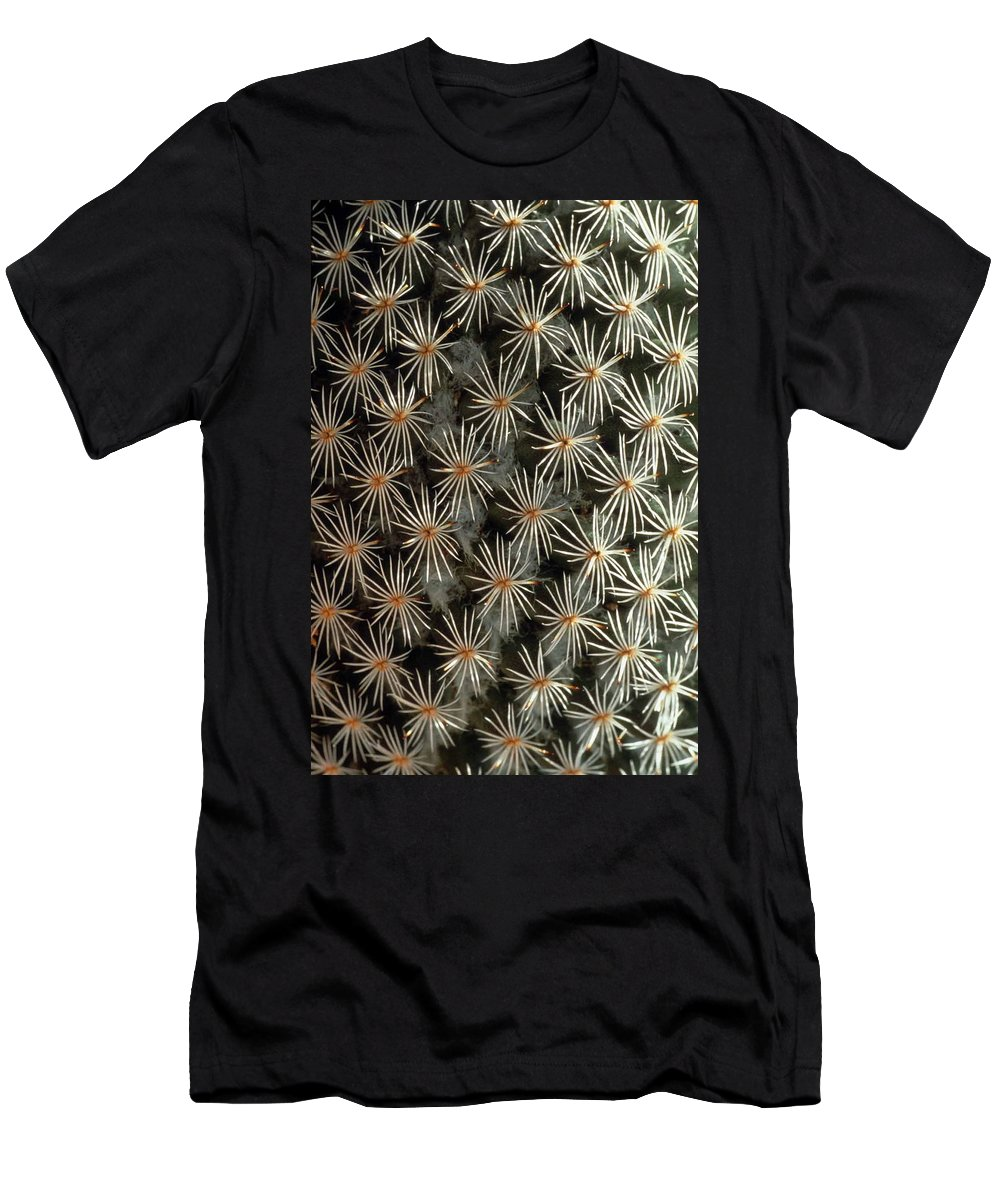 Cactus Men's T-Shirt (Athletic Fit) featuring the photograph Patterns In Light And Dark by Laurie Paci
