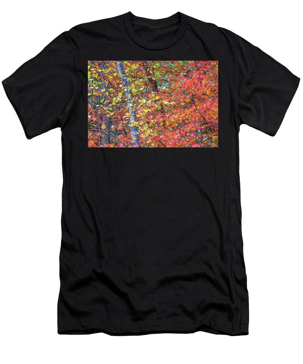 Fall Foliage Men's T-Shirt (Athletic Fit) featuring the photograph Peak Color by Diane Moore