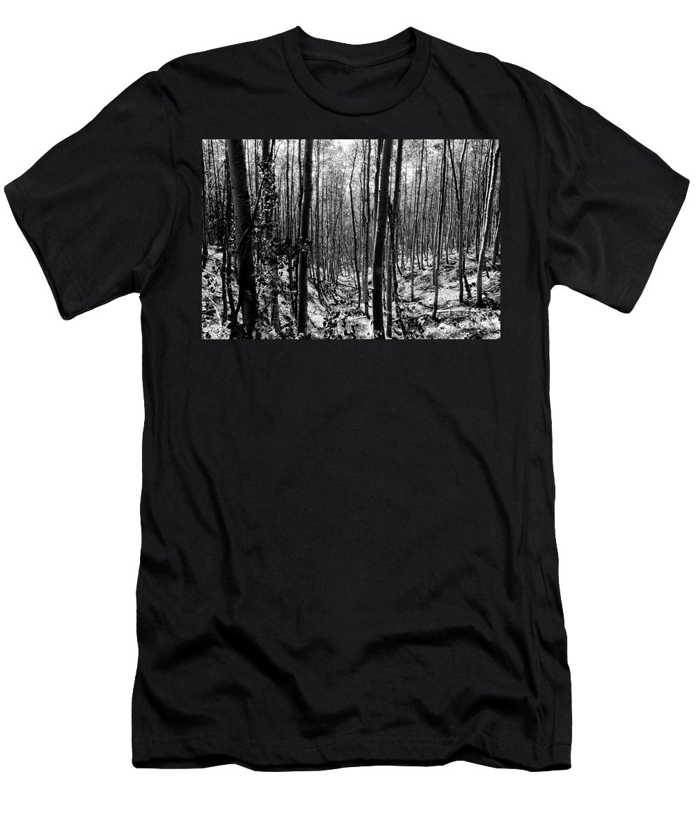 Pecos National Forest Men's T-Shirt (Athletic Fit) featuring the photograph Pecos Wilderness by David Lee Thompson