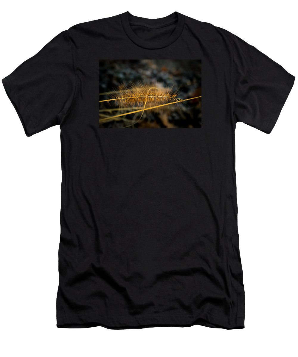 Black Men's T-Shirt (Athletic Fit) featuring the photograph Fountain Pennisetum In Evening Sun by Douglas Barnett